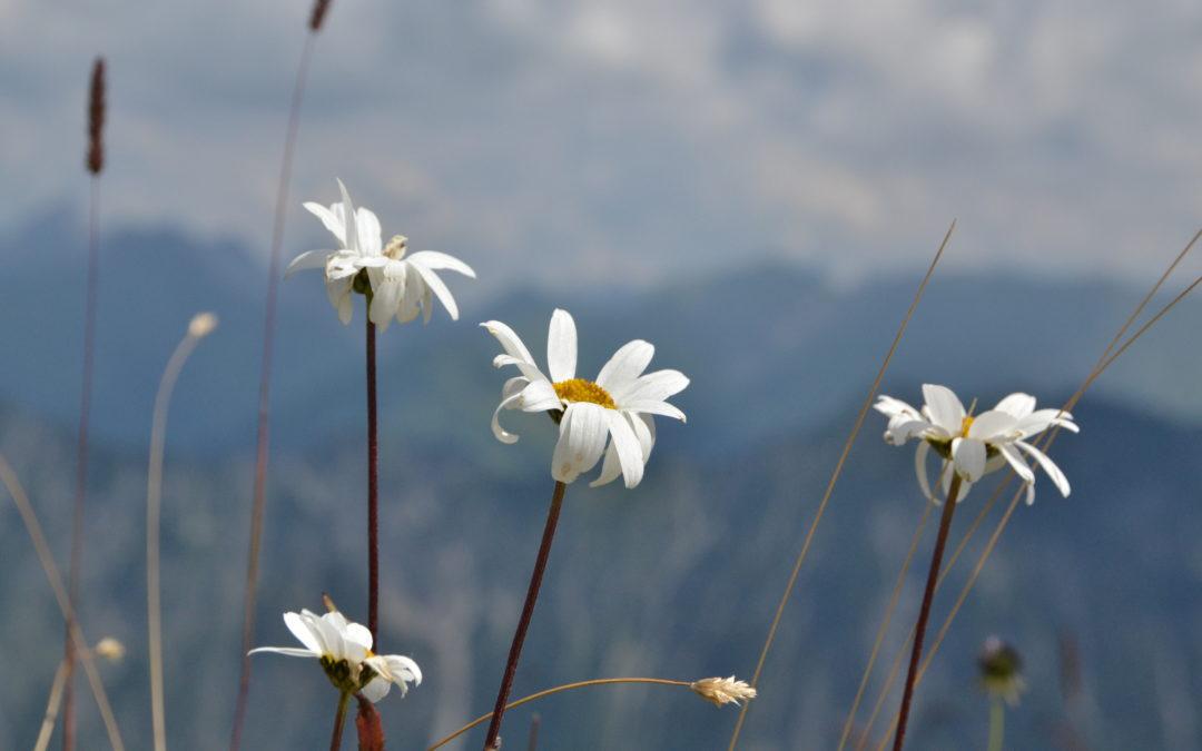 Alpenrausch – warum ich die Berge so liebe